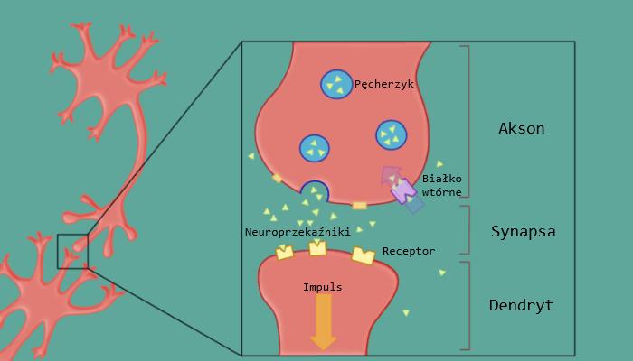 Działanie antydepresantów na nasz mózg